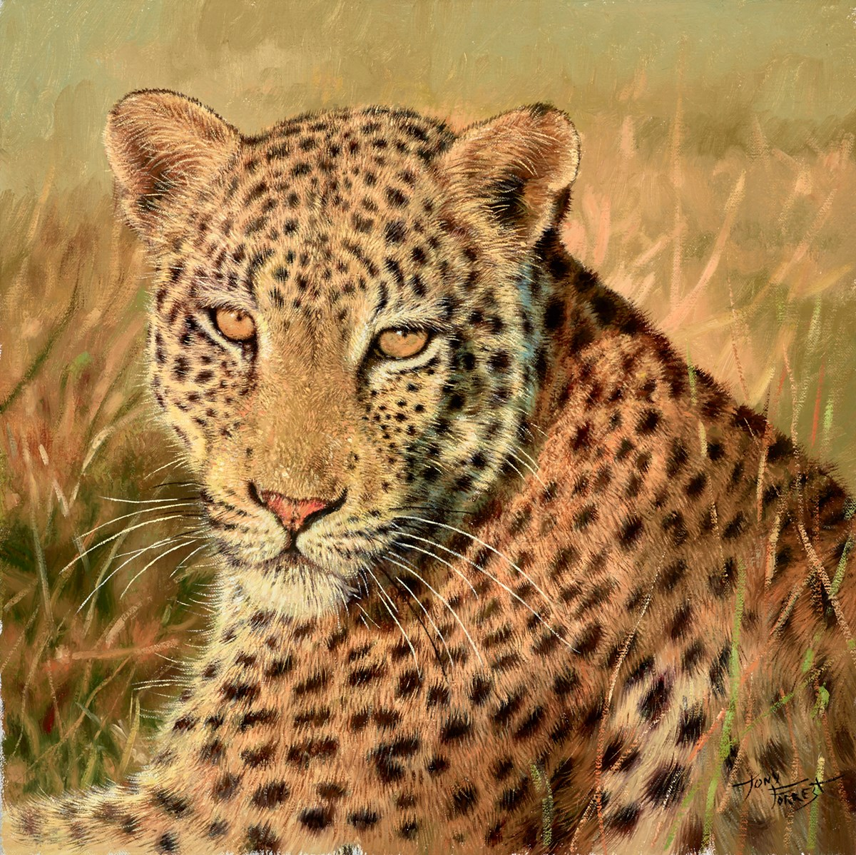 Mara Leopard by tony forrest -  sized 16x16 inches. Available from Whitewall Galleries